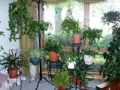 купить фитолампы для растений в беларуси